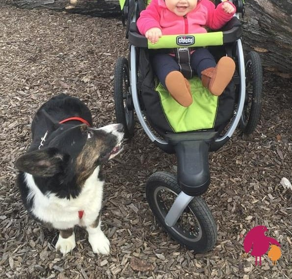 Dog next to baby in jogging stroller