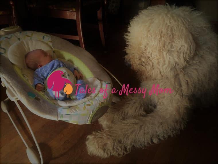 Dog looking at baby